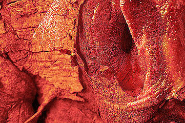 photo of tree bark that resembles female private parts