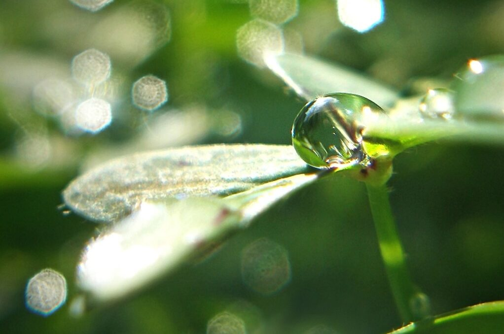 photo of drop of water on a plant