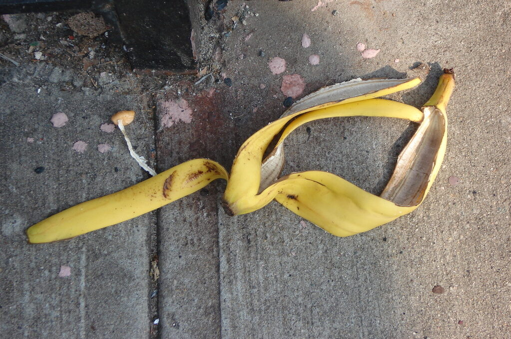 photo of banana peel on the ground